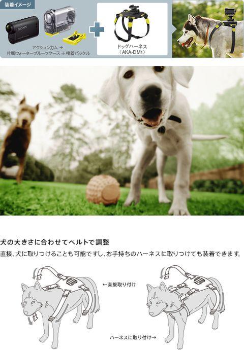 y_aka-dm1_001.jpg